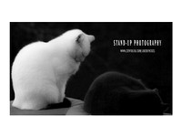 A Black and White Cats Asleep standing zenfolio poster Stand-up Photography